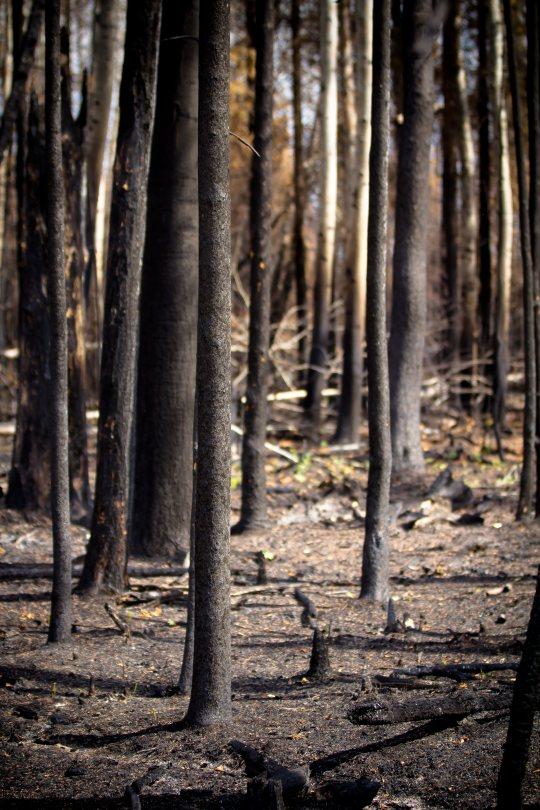 Fire Aftermath 2 - Northwestern Alberta