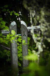 Fence Posts - Alexandra Falls, Northwest Territories