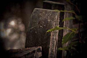 Fence Posts 2 - Alexandra Falls, Northwest Territories