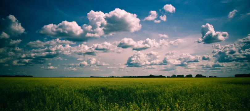 Canola & Stacking Clouds 1 - High Level, Alberta