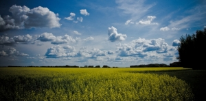 Canola & Stacking Clouds 2 - High Level, Alberta
