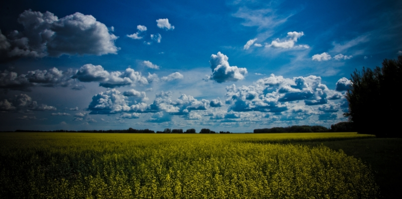 Canola & Stacking Clouds 3 - High Level, Alberta