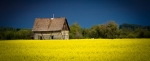 Homestead Amongst Canola 1 - Fort Vermilion, Alberta