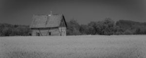 Homestead Amongst Canola 2 - Fort Vermilion, Alberta