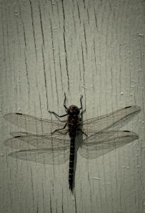 2 Dragonfly - High Level, Alberta