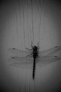 3 Dragonfly - High Level, Alberta