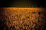 Grain Macro 3 - Guy, Alberta