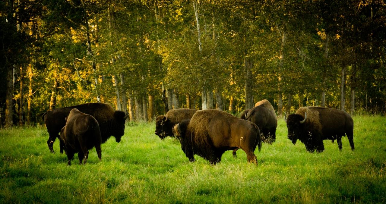Elk Island Park Images