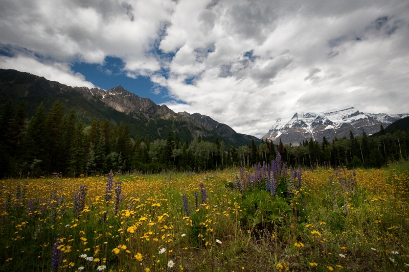 Mount Robson's Valley