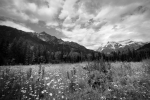 Robson Valley B/W - Mount Robson, British Columbia