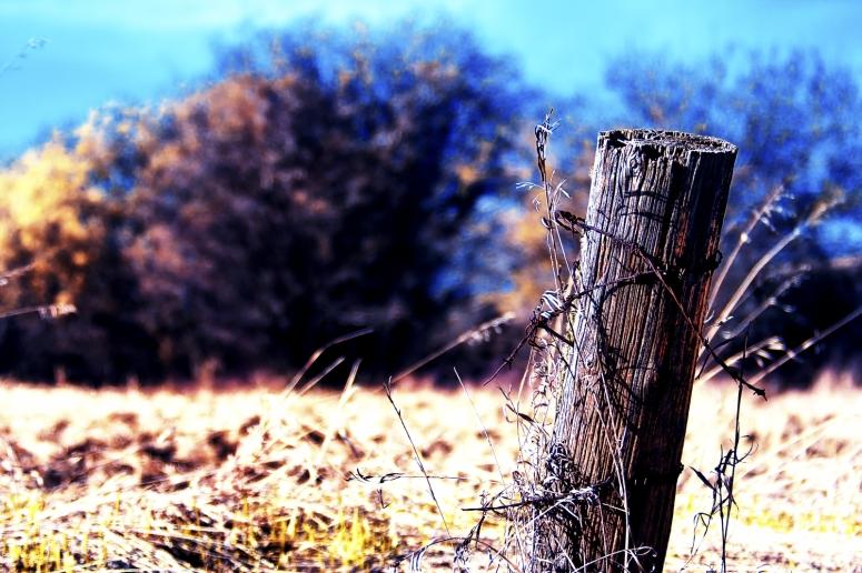 Fence Post 1