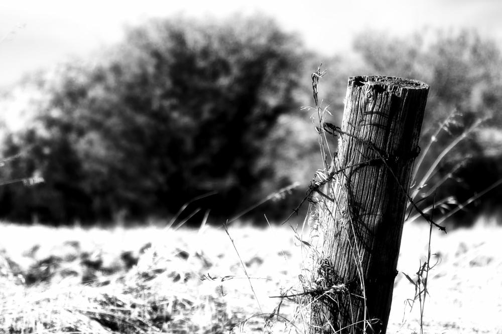 Fence Post 2