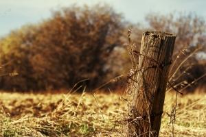 Fence Post 3