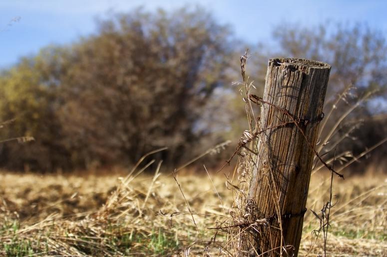 Fence Post 4