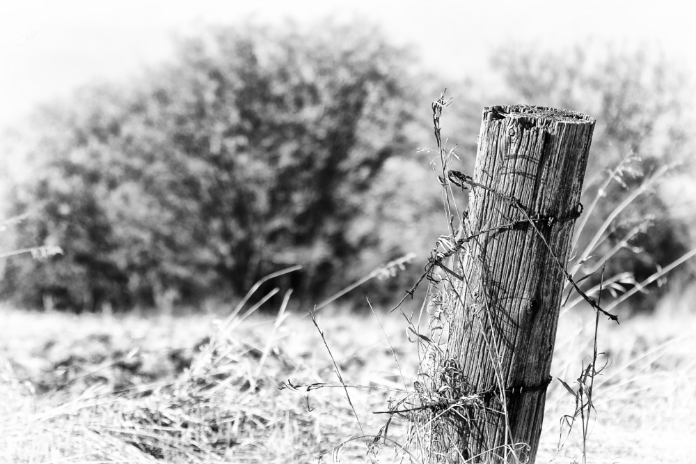 Fence Post 5