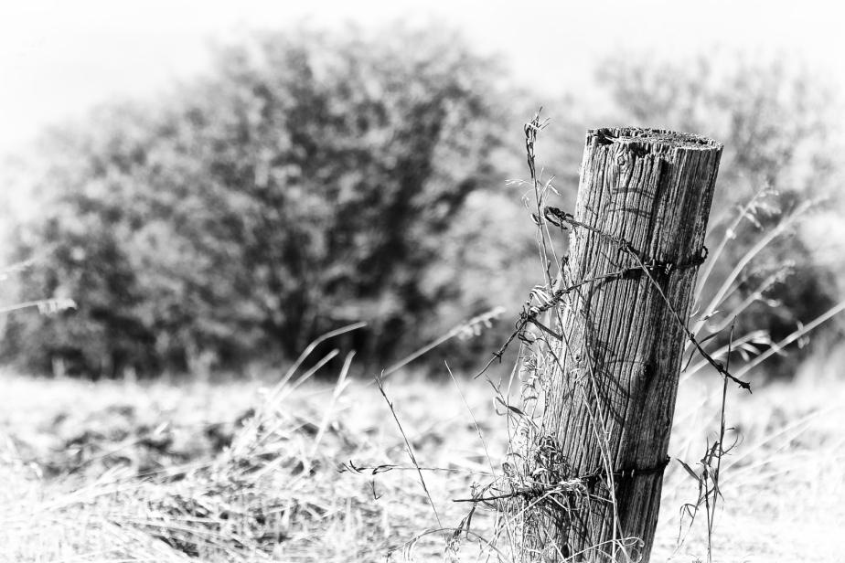 Fence Post 5