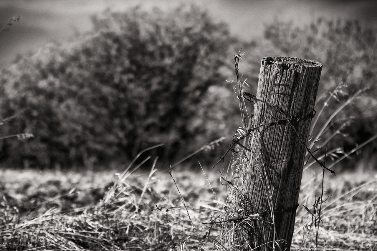 Fence Post 6