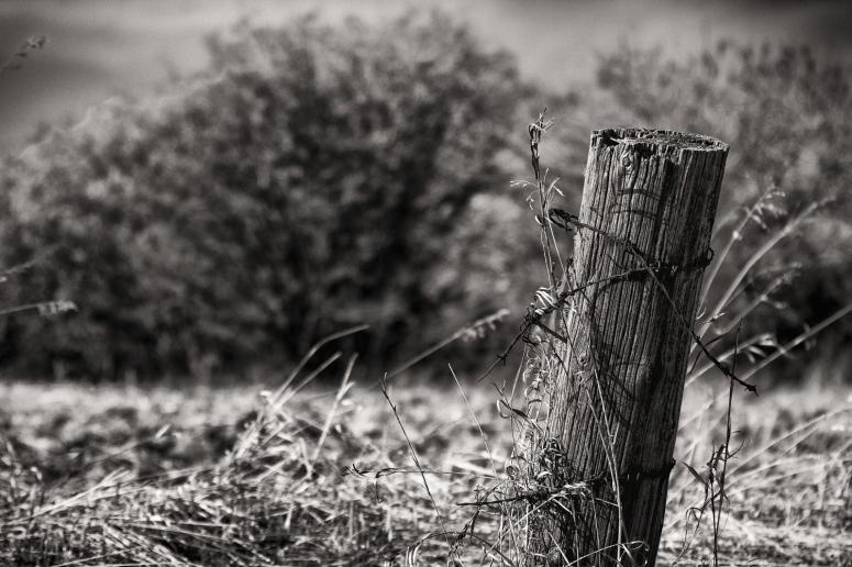 Fence Post 6