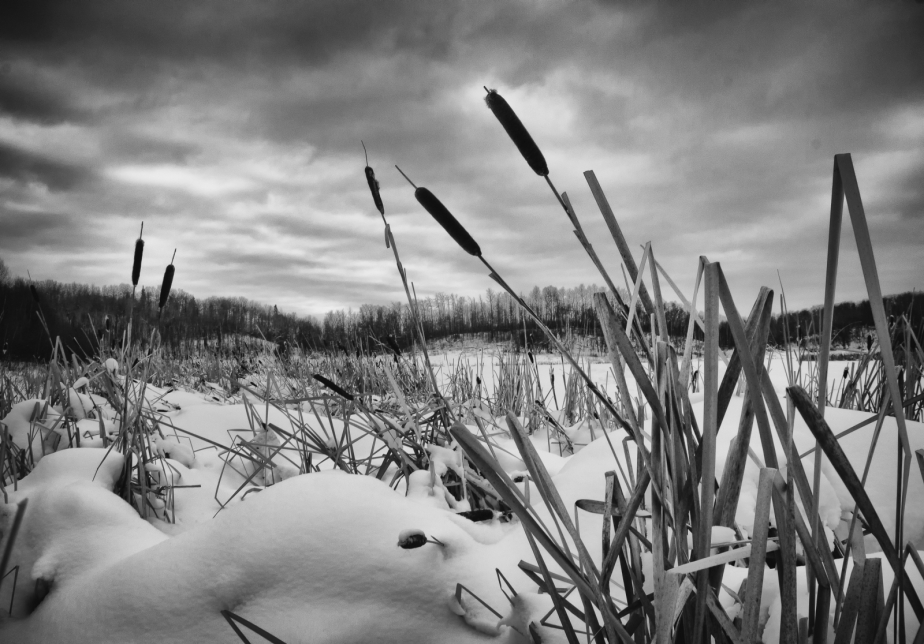 Eastern Lakeshore - Cattails