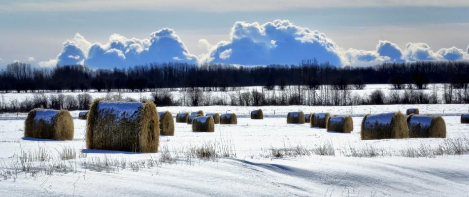 Hay Bale - Fields