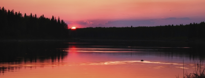 Beaver and Sunset - Dixonville, Alberta