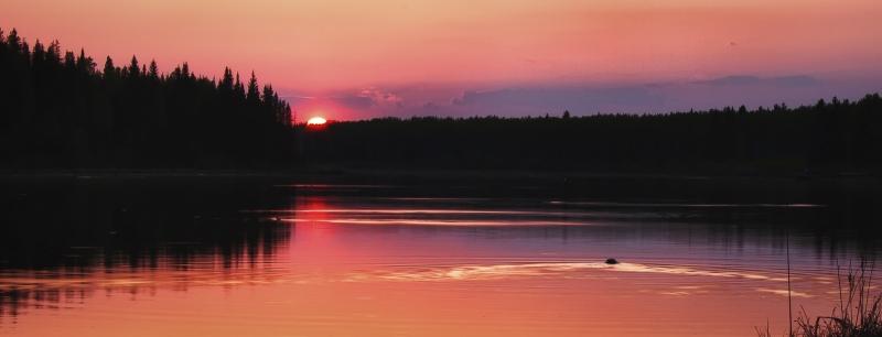 Beaver and Sunset - Dixonville, Alberta