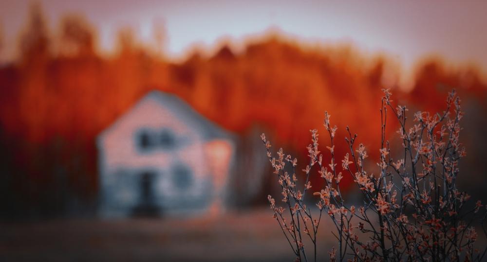 Russet Buds - Buttertown, Alberta
