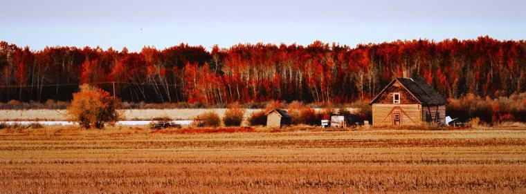 Homestead - Fort Vermilion, Alberta 1