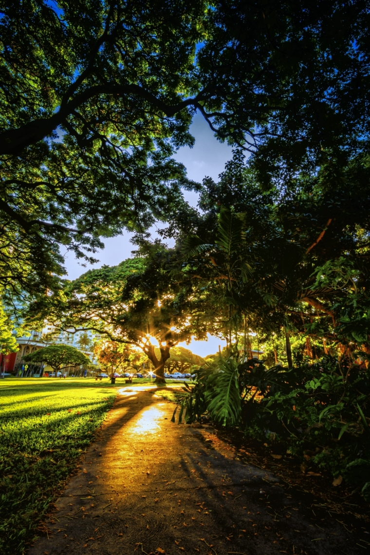 Morning's Walk - Honolulu, Oahu, HI 1