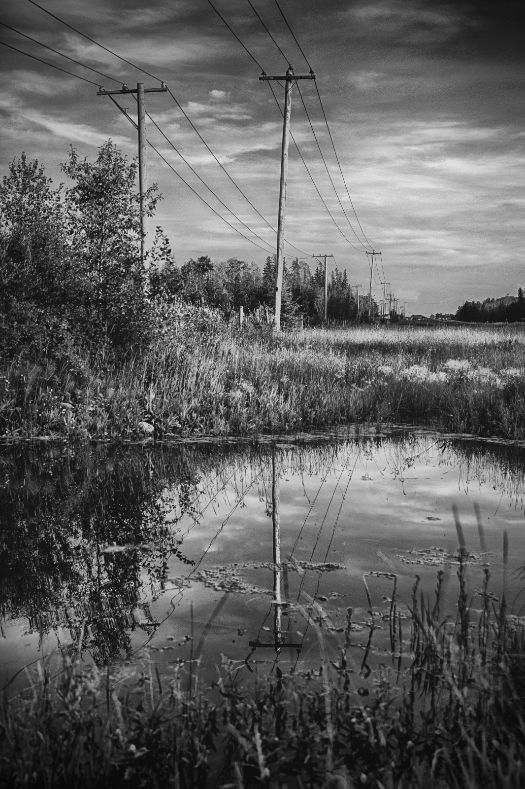 Alberta Reflection - Grande Prairie 1