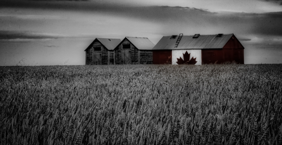 Canadian Shed - Donnelly, Alberta 1