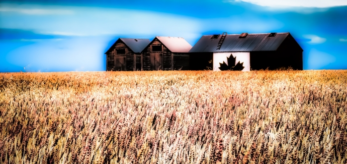 Canadian Shed - Donnelly, Alberta 2