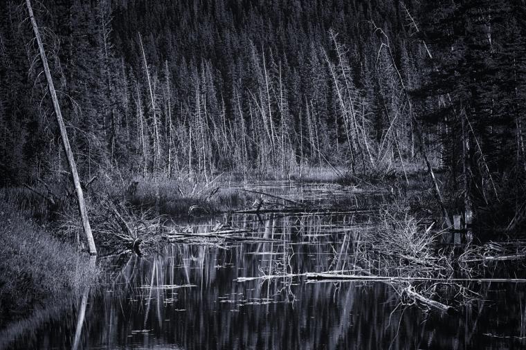 Wooded Reflection - Jasper, Alberta 2