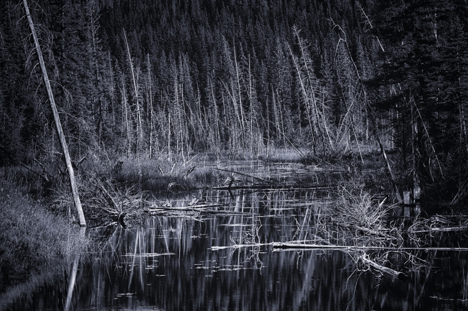Wooded Reflection - Jasper, Alberta 2