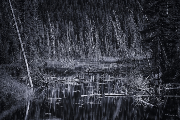 Wooded Reflection - Jasper, Alberta 3