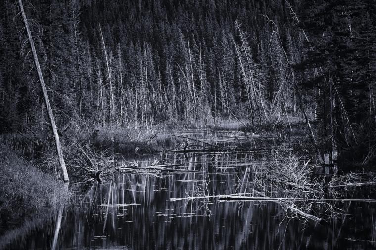Wooded Reflection - Jasper, Alberta 3
