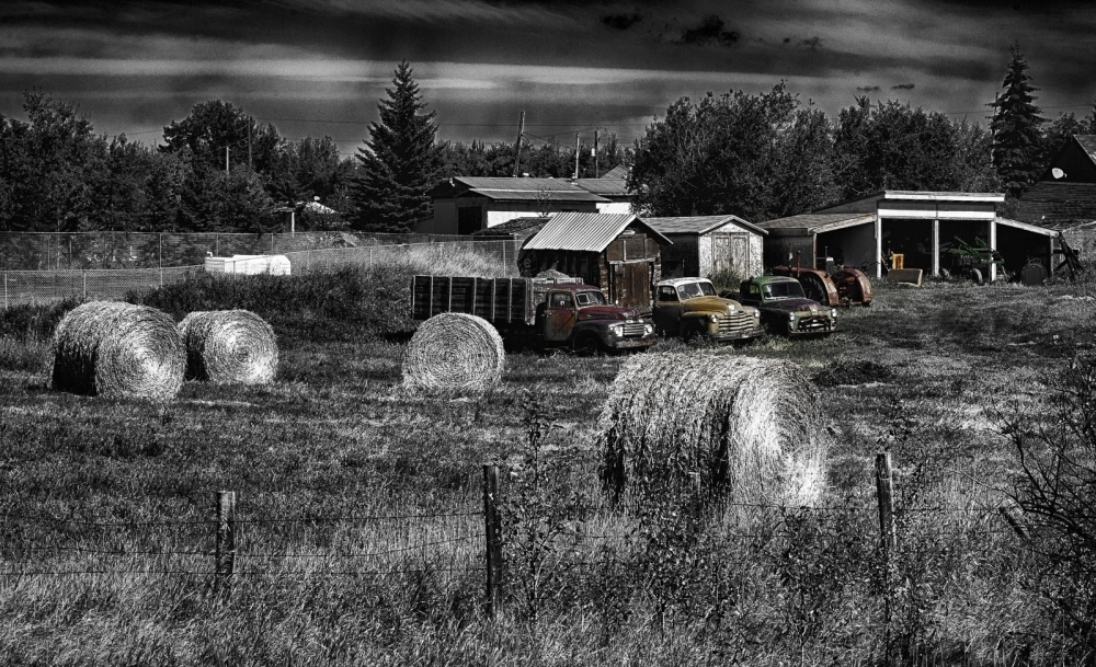 Field Shared - Greencourt, Alberta 1