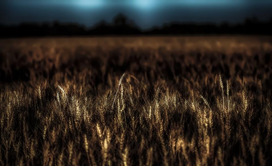 Harvest - Nampa, Alberta 2