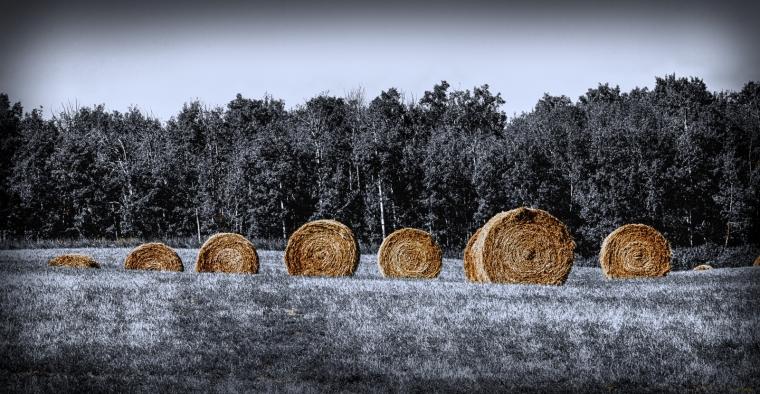 Round Bales - Sangudo, Alberta 2