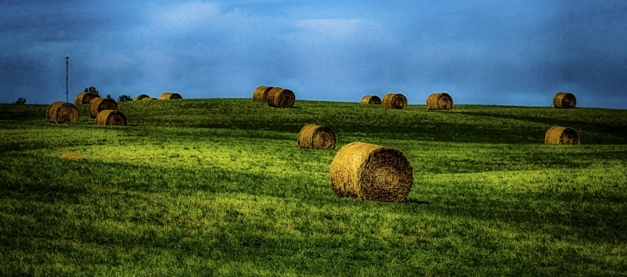 Round Bales - Sangudo, Alberta 3