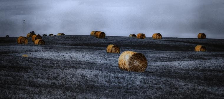 Round Bales - Sangudo, Alberta 4