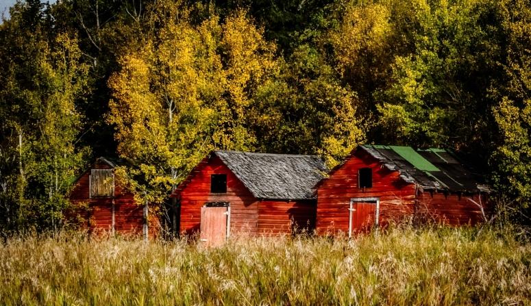 1 Grain Bins - Manning, Alberta