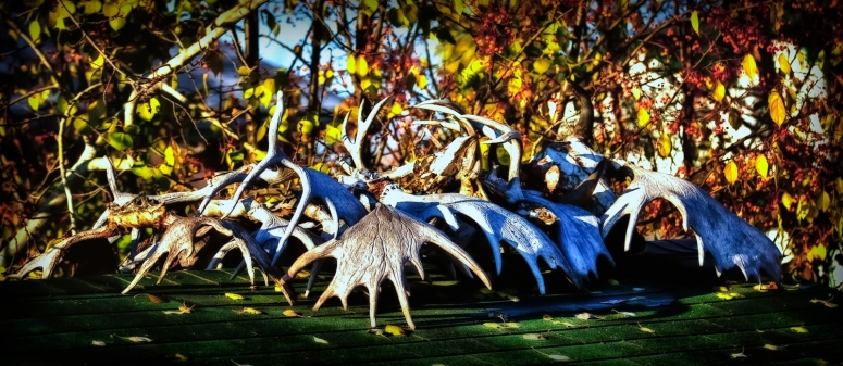 Antlers - High Level, Alberta 1