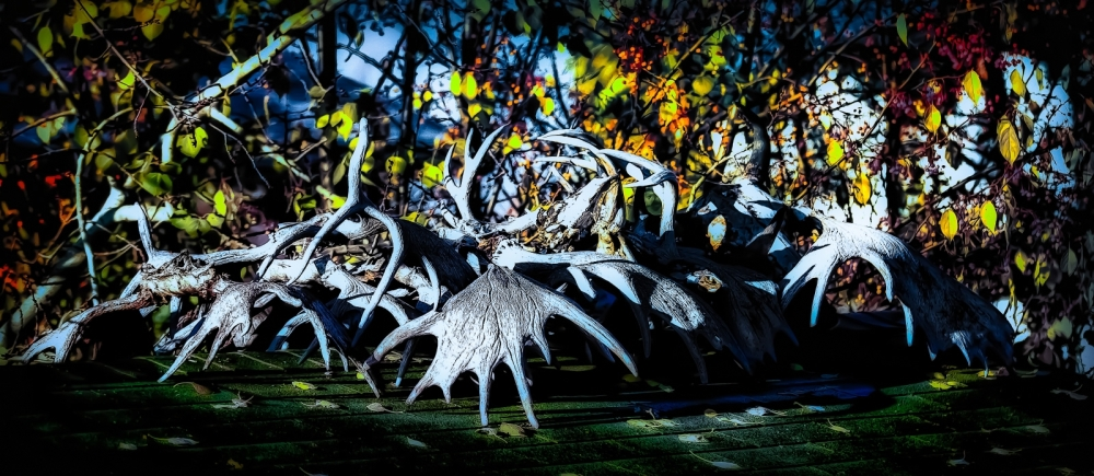 Antlers - High Level, Alberta 2