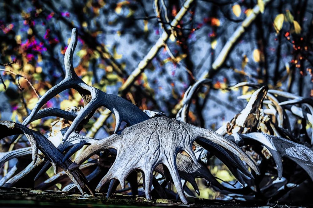Antlers - High Level, Alberta 3