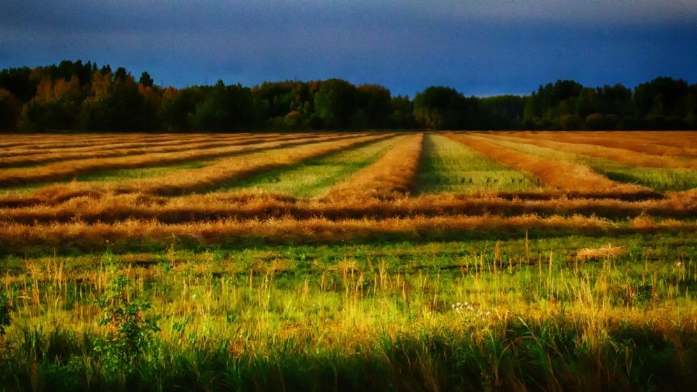 Hay Harvest - Keg River, Alberta
