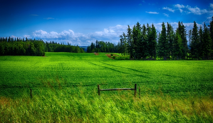 Field Green - Near Greencourt, Alberta