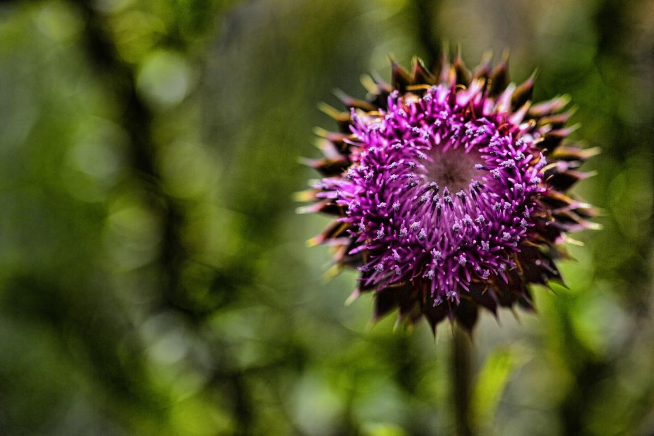 Utah Flower 1