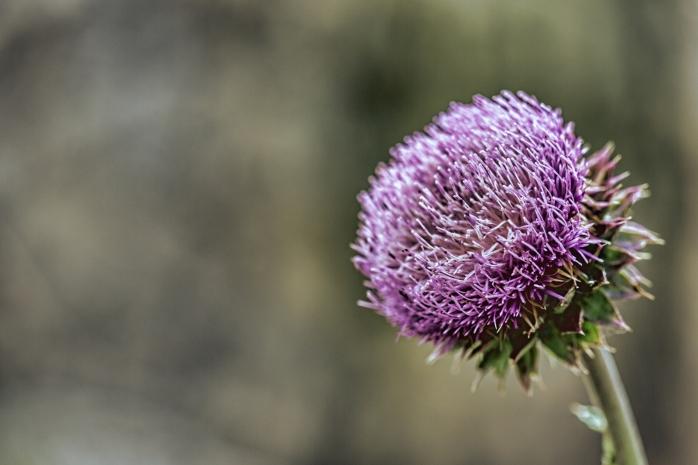 Utah Flower 2