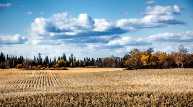 Autumn's Desaturation - Rycroft, Alberta 1